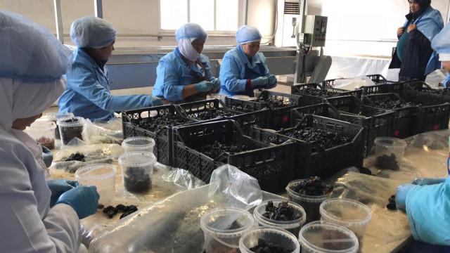 Европейские компании прибыли в Кыргызстан для налаживания сотрудничества с экспортерами.