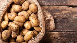 В Узбекистан экспортировано 80 тонн пробной партии картофеля